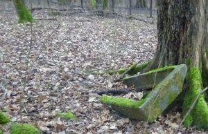 Grab und Baum Kaliningrad