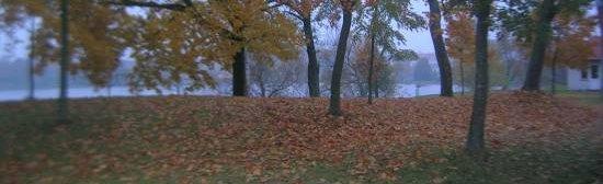 Trees in Rhein Ryn Cemetery